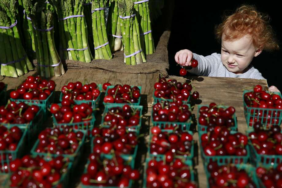 Two-year-old BB  Caspare checks out cherries at the farmers' market at the Marin Civic Center in San Rafael. Photo: Ramin Rahimian, Special To The Chronicle