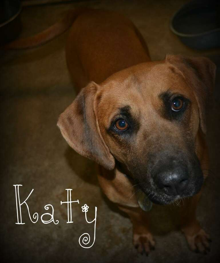 KatyBlack Mouth Cur MixAdult femaleSize: Medium