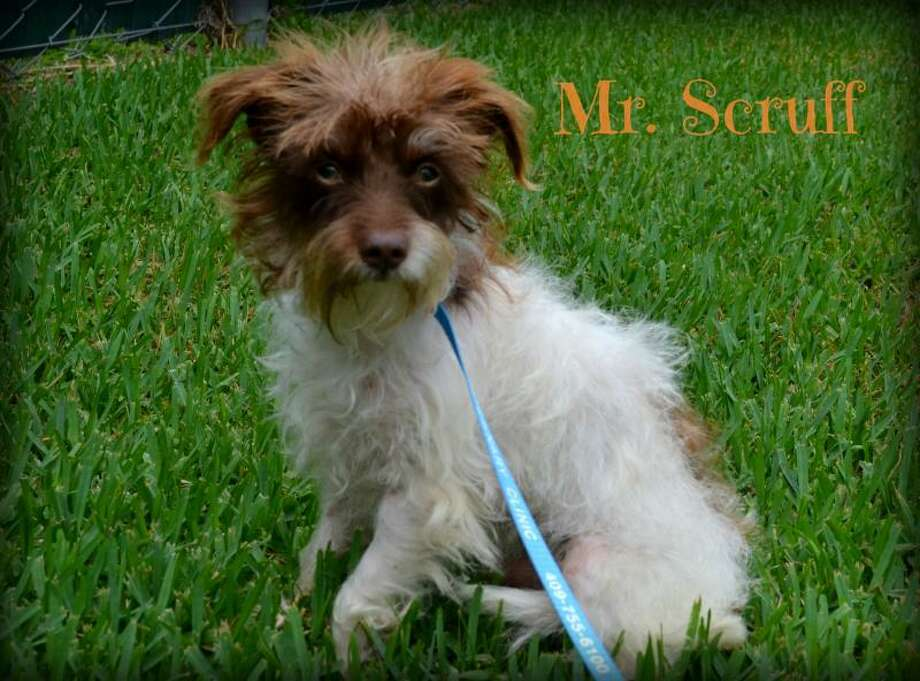 Mr. ScruffTerrier MixYoung maleSize: Small