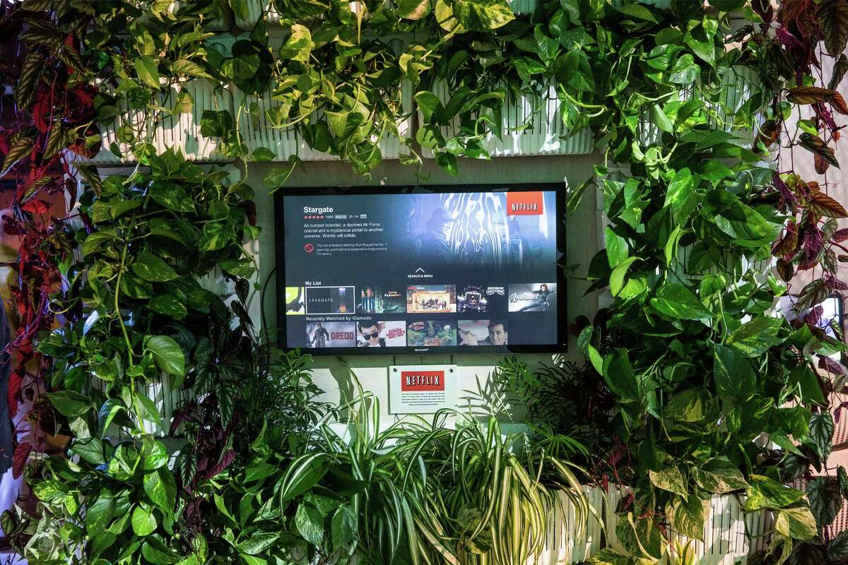 NEW YORK, NY - MAY 16: A television and indoor ferns are seen in Gizmodo's