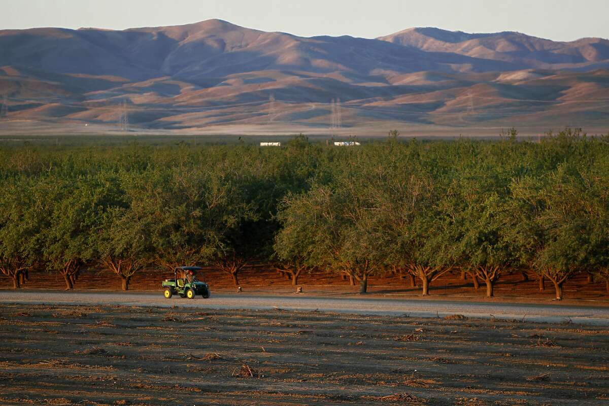 A block of live almond trees is visible next one that formerly held live ones March 14, 2014 on the land of Baker Farming in Firebaugh, Calif. Barry Baker decided late last year to pull up 1,000 acres of his almond trees to save water during the drought.