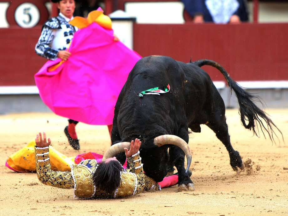 Spanish matador David Mora is gored by a bull during a bullfight of the San Isidro Feria at the Las Ventas bullring in Madrid on May 20, 2014. Half-tonne fighting bulls skewered or trampled all three matadors in an extraordinary upset at Madrid's prestigious Las Ventas bullring, forcing the entire spectacle to be cancelled. Photo: Stringer, AFP/Getty Images