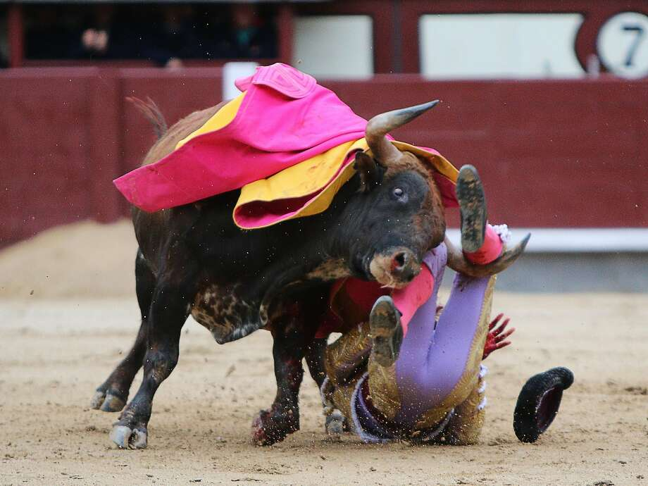 Spanish matador Antonio Nazare is gored by a bull during a bullfight of the San Isidro Feria at the Las Ventas bullring in Madrid on May 20, 2014. Half-tonne fighting bulls skewered or trampled all three matadors in an extraordinary upset at Madrid's prestigious Las Ventas bullring, forcing the entire spectacle to be cancelled. Photo: Stringer, AFP/Getty Images