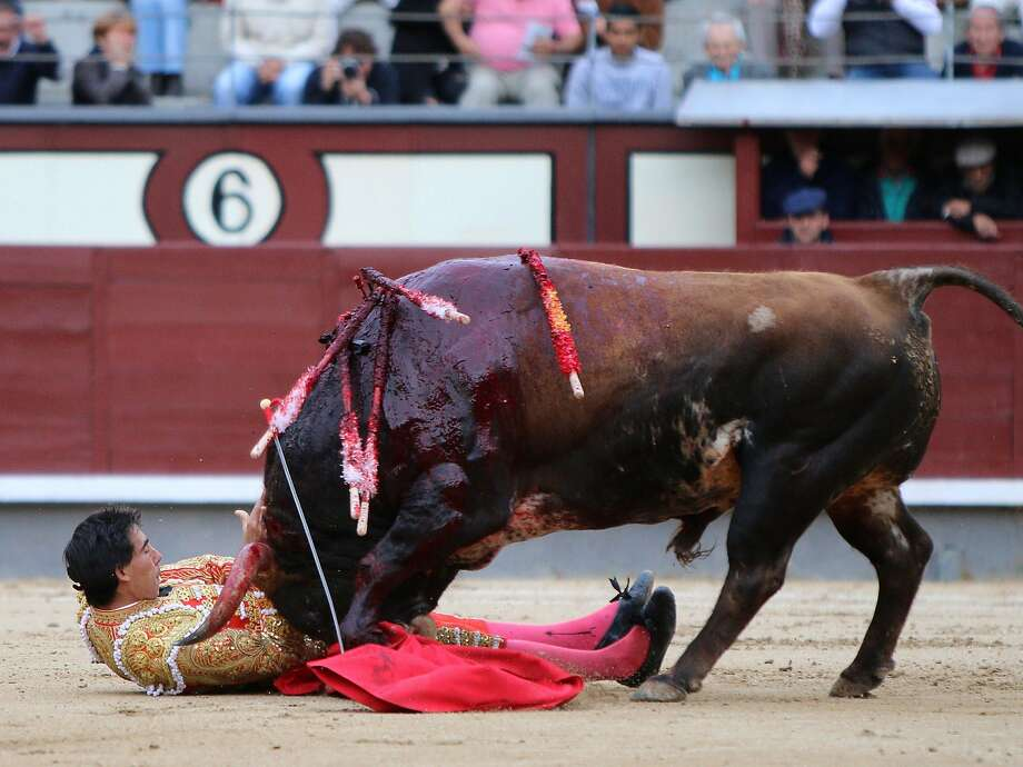 Spanish matador Jimenez Fortes is gored by a bull during a bullfight of the San Isidro Feria at the Las Ventas bullring in Madrid on May 20, 2014. Half-tonne fighting bulls skewered or trampled all three matadors in an extraordinary upset at Madrid's prestigious Las Ventas bullring, forcing the entire spectacle to be cancelled.  Photo: Stringer, AFP/Getty Images