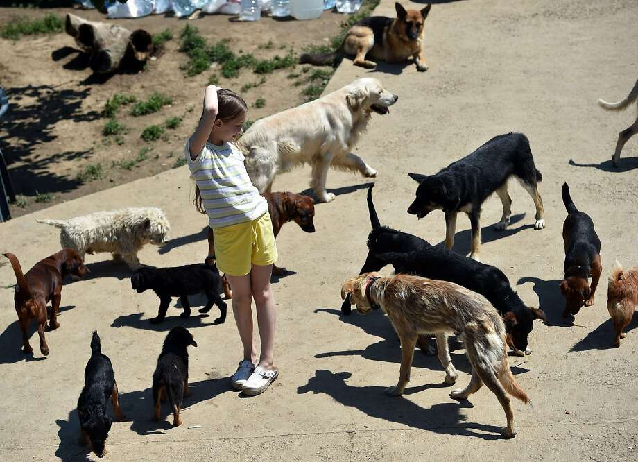 Saved from the deluge: A girl plays with rescued dogs in an animal shelter in the village of Drazevac, Serbia. The dogs were among hundreds of pets and strays stranded for days in the nearby flooded Serbian town of Obrenovac. Photo: Andrej Isakovic, AFP/Getty Images