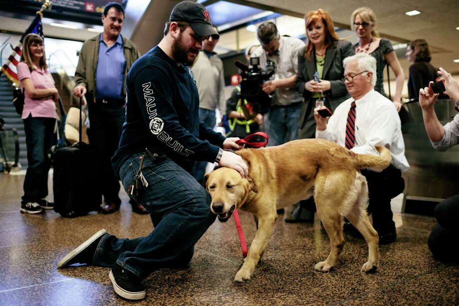 U.S. Marine Corps veteran Sergeant Deano Miller, left, is reunited with military working dog Thor, a yellow Labrador with whom Deano served with in Afghanistan Thursday, May 22, 2014, at Seattle-Tacoma International Airport in SeaTac, Wash. Thor was adopted by Cpl. Miller, ensuring his retirement in the U.S. and his reintegration into a home after a lifetime of service to his country. Photo: JORDAN STEAD, SEATTLEPI.COM / SEATTLEPI.COM
