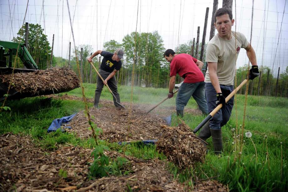 Laying down mulch on beds of hops bines at Camps Road Farm Thursday, May 22, 2014, are from left, Nicholas Osborne, John Suscovich and Barry Labendz. They are producing hops for Kent Fall Brewing Company which will be producing craft beer. Photo: Carol Kaliff / The News-Times