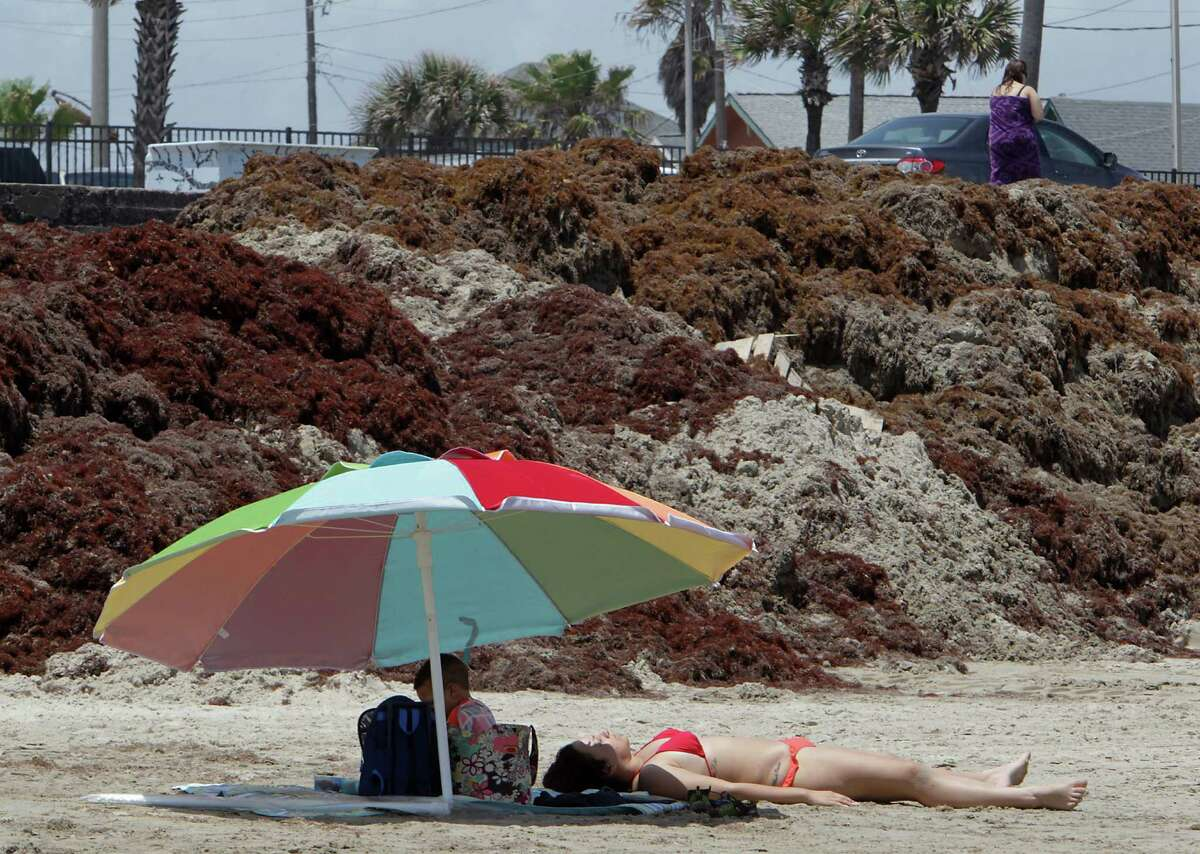 Beach visitors near mounds of seaweed on the beach near 19th street Thursday, May 22, 2014, in Galveston.