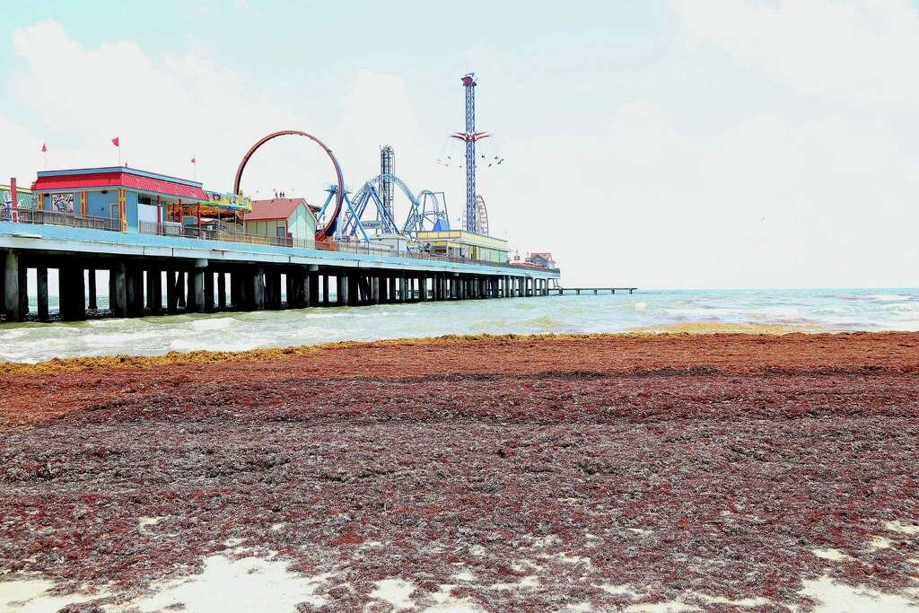 25th Street Galveston Island10 Percent Of Water Samples Exceeded The National Safety Threshold For Enterococcus Quintana Beach