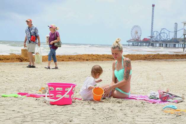Katelyn Lowery right, and her 23 month-old daughter Johnsie Lowery 2nd from right, play in the sand as mounds of seaweed build up on the beach near 21st street Thursday, May 22, 2014, in Galveston. Photo: James Nielsen, Houston Chronicle / © 2014  Houston Chronicle