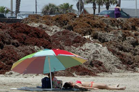 Beach visitors enjoy the sun near some smelly mounds of seaweed on the beach near 19th street Thursday in Galveston. The island still expect brisk holiday business.