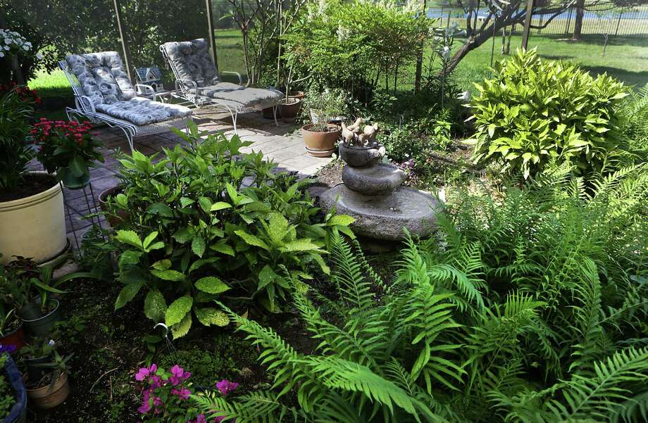 The screened-in backyard at the home of Ann and George Berg, complete with a fountain and lush plants, is a favorite spot for the couple and their grandchildren. Photo: BOB OWEN, San Antonio Express-News / © 2012 San Antonio Express-News