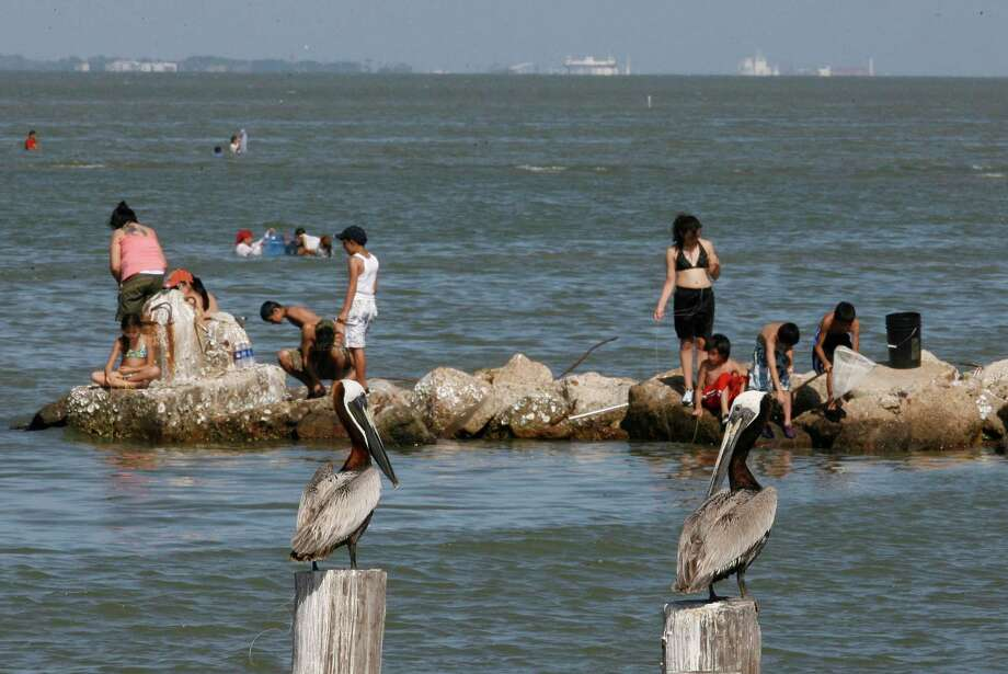 TEXAS CITY (saltwater): Redfish are fair to good in Moses Lake on shrimp. Trout and black drum are good on the reefs on live shrimp. Photo: James Nielsen, Houston Chronicle / © 2008 Houston Chronicle