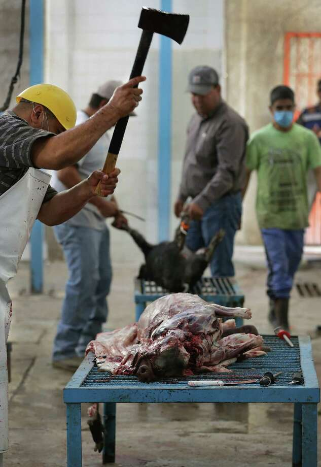 Miguel Angel Dominguez uses an axe to chop off the head of a feral hog trapped on a farm just outside Ojinaga, MX. A group from the Chihuahua State Wildlife office trap and kill wild hogs that are destroying farmers crops just outside Ojinaga, MX. Since there is little to no farming across the river in Presidio County, it is believed the hogs are coming from the US in search of food. Tuesday, May 13, 2014. Photo: BOB OWEN, San Antonio Express-News / © 2012 San Antonio Express-News