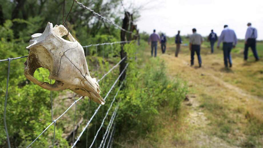 A hog scull hangs on a  fence which borders a farm just outside Ojinaga, MX.  A group from the Chihuahua State Wildlife office trap and kill wild hogs that are destroying farmers crops just outside Ojinaga, MX. Since there is little to no farming across the river in Presidio County, it is believed the hogs are coming from the US in search of food. Tuesday, May 13, 2014. Photo: BOB OWEN, San Antonio Express-News / © 2012 San Antonio Express-News