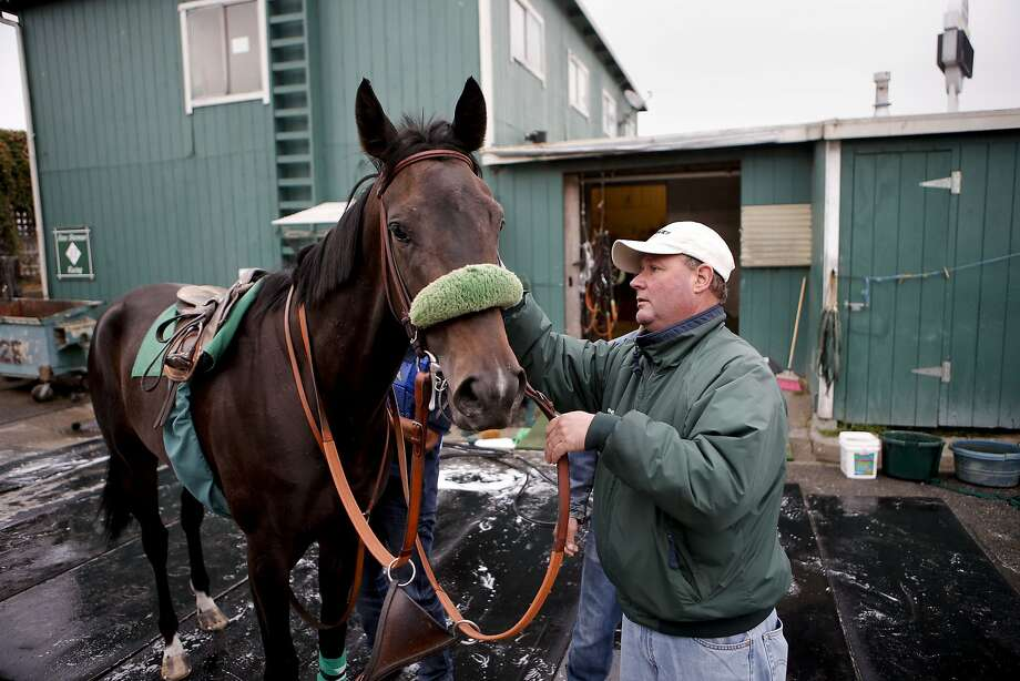 Steve Sherman works last week with one of the horses he trains at Golden Gate Fields. Photo: Michael Macor, The Chronicle