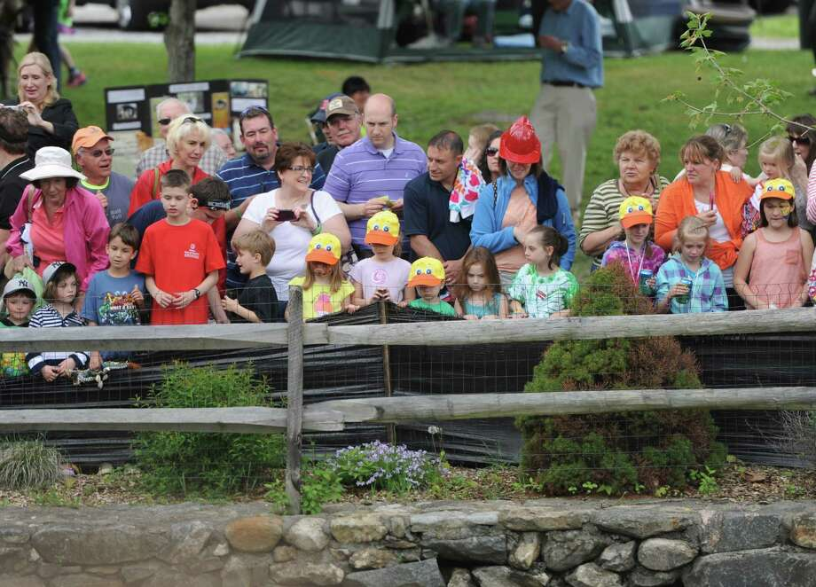 Photos from the Great Pootatuck Duck Race in Sandy Hook, Conn. Saturday, May 24, 2014.  The annual race, now in its 14th year, was comprised of about 4,000 ducks racing down the Pootatuck River in Sandy Hook.  Ducks cost $5 to enter in the race, with the winner taking home $2,000.  Church Hill Road in Sandy Hook was filled with entertainment leading up to the ceremonial dumping of the ducks, including live music, dance, circus and karate performances, kids activities and a large tag sale at Newtown United Methodist Church. Photo: Tyler Sizemore / The News-Times