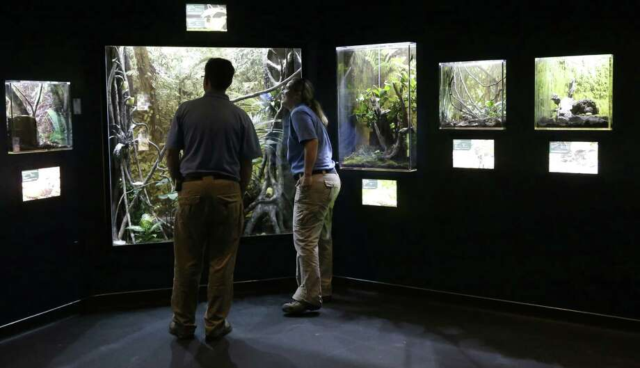 "Employees at the Houston Zoo get their first look at ""The Bug House,"" which opened this weekend. Photo: Pat Sullivan / Associated Press / AP"