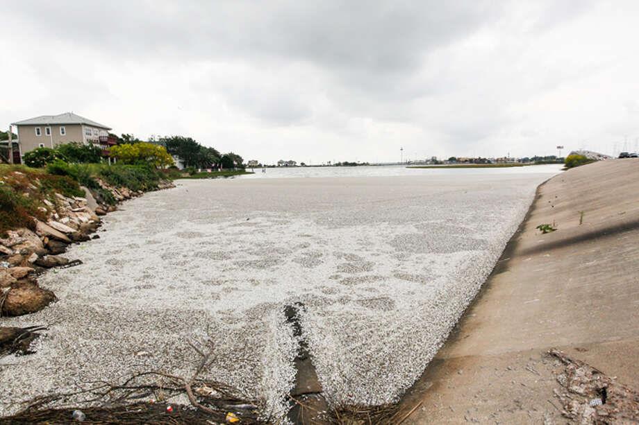 Kemah and Seabrook are the most-heavily affected, according to Heather Biggs, a regional biologist with the Texas Parks and Wildlife Department. Her team has been in the area for days now surveying the scene. Photo: Johnny Hanson / Houston Chronicle