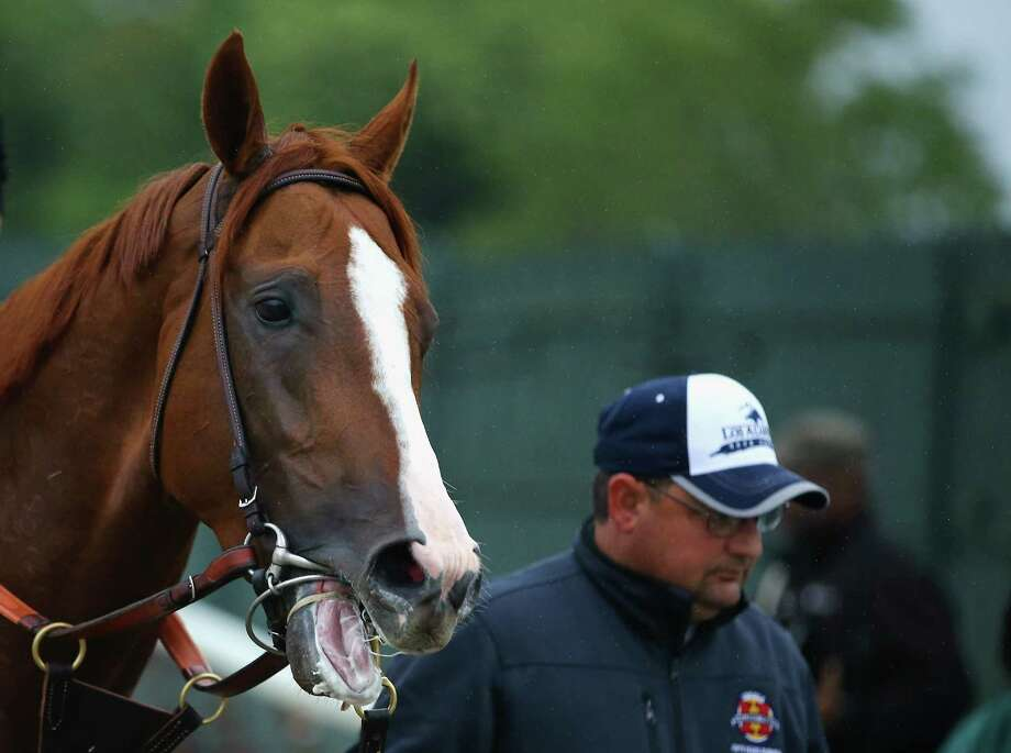 ELMONT, NY - MAY 24:  Kentucky Derby and Preakness winner California Chrome,  lead by assistant trainer Alan Sherman, leaves the track at Belmont Park on May 24, 2014 in Elmont, New York. He is scheduled to race for the Triple Crown in the 146th running of the Belmont Stakes  (Photo by Al Bello/Getty Images) ORG XMIT: 492606809 Photo: Al Bello / 2014 Getty Images