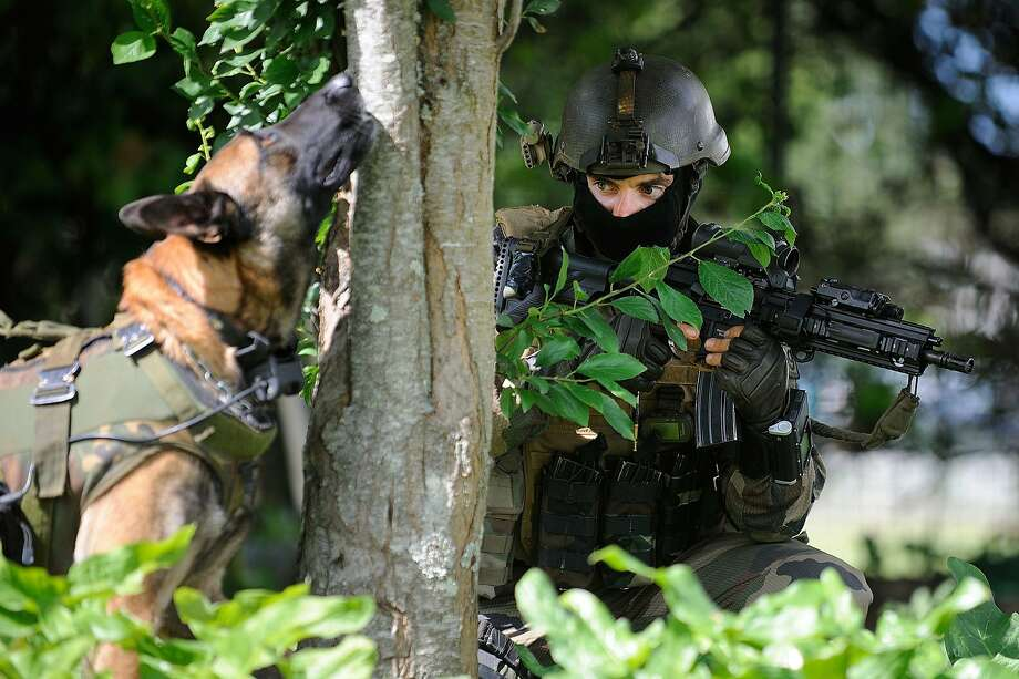 What do you see, boy?During mock combat in Lanester, France, the military K-9 of a French army Special Forces   soldier of the Kieffer Commando detects a sniper in a tree. Or possibly a squirrel. Photo: Jean-Sebastien Evrard, AFP/Getty Images