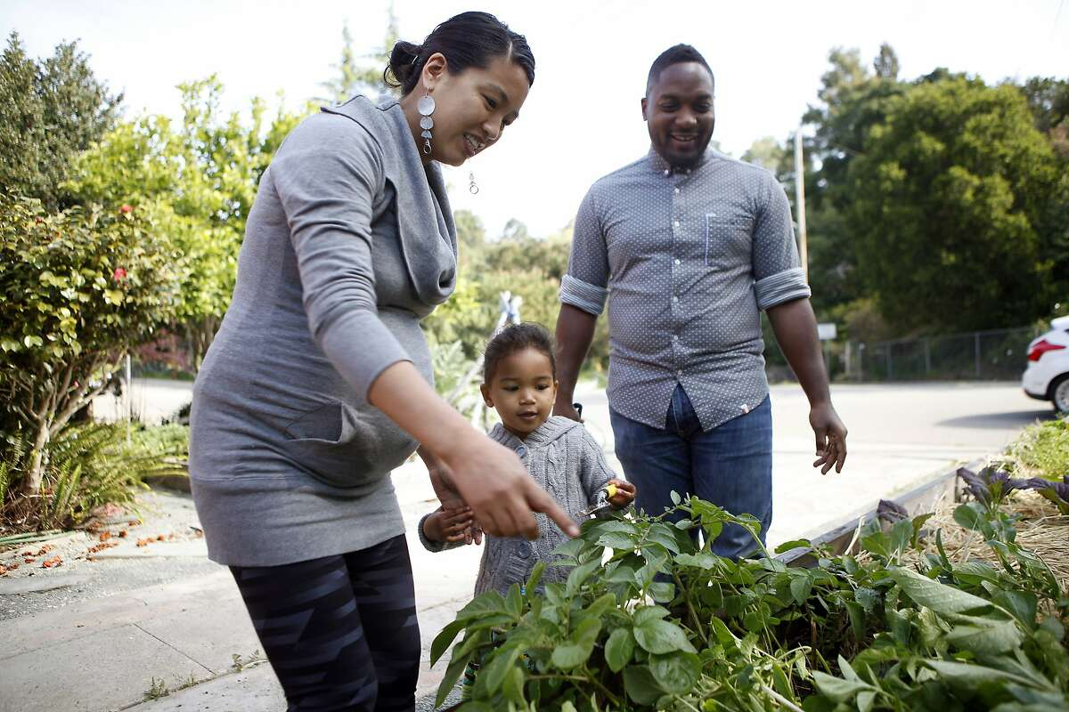 Chef, author and food activist Bryant Terry watches as his wife Jidan Tery-Koon and daughter Mila, 3, pick out fingerling potatoes from their front yard garden at their home in Oakland, CA, Saturday April 19, 2014.