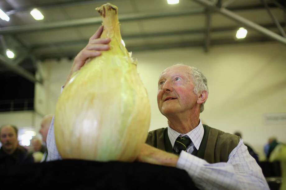 Giant vegetable grower Peter Glazebrook from Newark poses with his world record-breaking onion that weighed in at 18 pounds, 1 ounce, beating his previous world record by almost 2 ounces, at the Harrogate Autumn Flower Show on Sept. 14, 2012, in Harrogate, England. Photo: Christopher Furlong, Getty Images / 2012 Getty Images