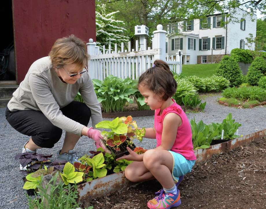 Carole Diesel and her granddaughter Carsen O'Donoughue, 5, plant Coleus as members of the Fort Orange Garden Club turn out for clean up and planting day at the Pruyn House gardens Tuesday May 27, 2014, in Colonie, NY.  (John Carl D'Annibale / Times Union) Photo: John Carl D'Annibale