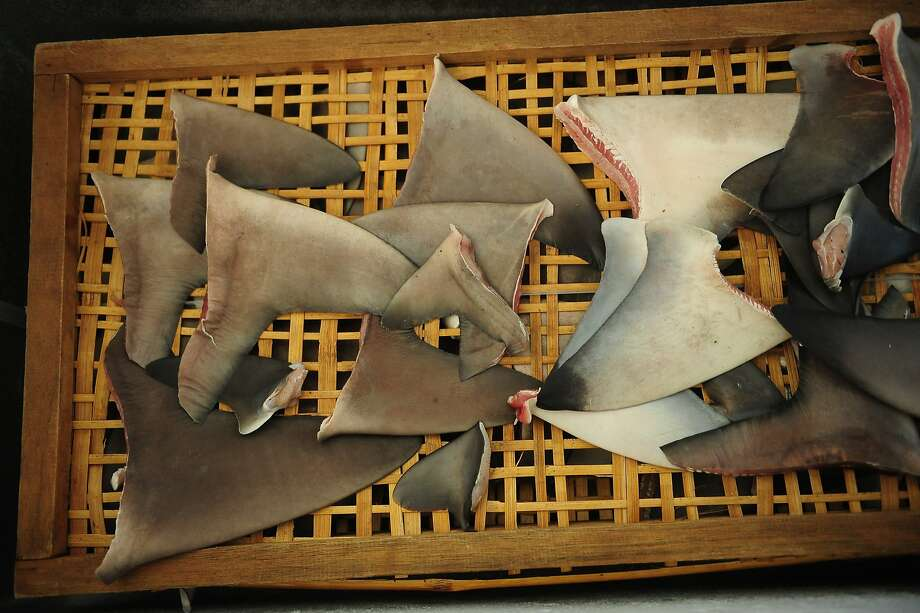 Slaughtered for their fins:Shark fins lie on a tray at Muncar Port in Banyuwangi, Indonesia. Indonesia has become one of the world leaders in 