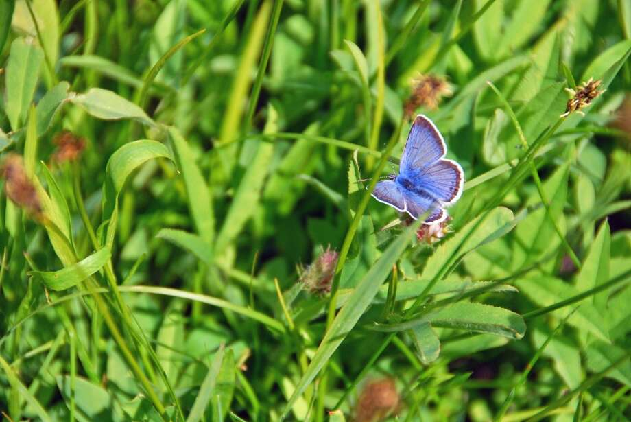 Gorgeous shot of butterfly in spring at Independence Lake Preserve Photo: Mike Conner/The Nature Conservancy