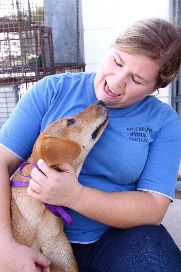 "Megan Jurasek pays attention to ""Hoot"", a lab/terrior mix, at the Rosenberg Animal Shelter. Photo: File Photo"