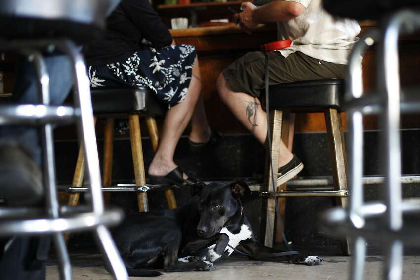 Kingfish Pub's laid-back vibe suits Blitz, who hangs out while his human companion chats for a spell.