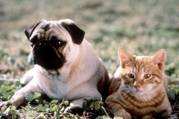 """The Adventures of Milo and Otis"" (1989) – Dudley Moore narrates this heartwarming tale of Milo the cat and Otis the dog, who grow up together and have a tendency to make mischief wherever they go. One day, the two get separated when Milo is swept downriver, and an epic journey begins."