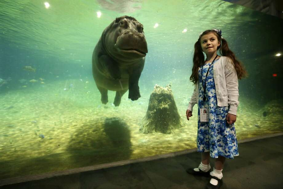 Audrey's new friend: Nine-year-old Audrey Bruben, about 65 pounds, and Genny the hippopotamus, about 4,000 pounds, pose 