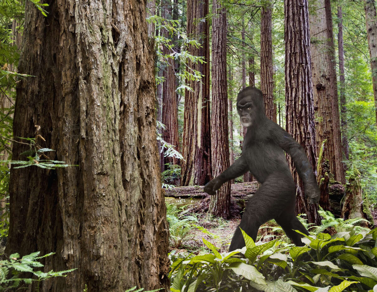 Bigfoot walking in forest