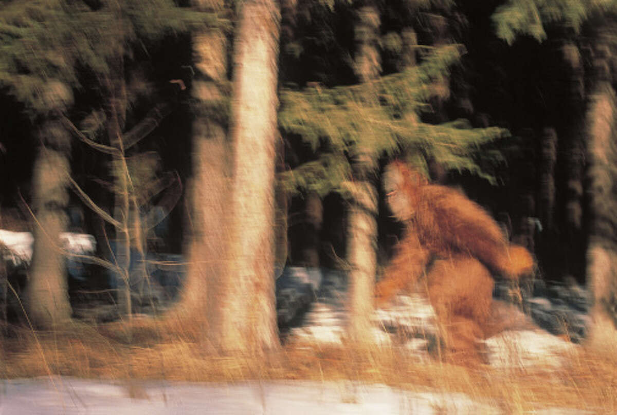 Blurred Bigfoot Running Through the Trees