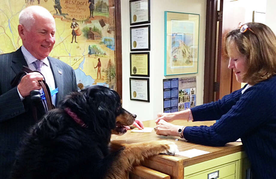 First Selectman Jim Marpe and his dog Madison, a Bernese mountain dog, came to Town Clerk Patricia Strauss' office Monday to renew Madison's license by the July 1 deadline. Photo: Contributed Photo / Westport News