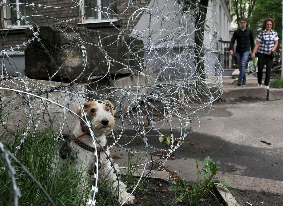 If the razor wire doesn't get you, the killer watchdog will: Pro-Russia militants set up this barricade in the eastern Ukrainian city of Donetsk. Photo: Viktor Drachev, AFP/Getty Images