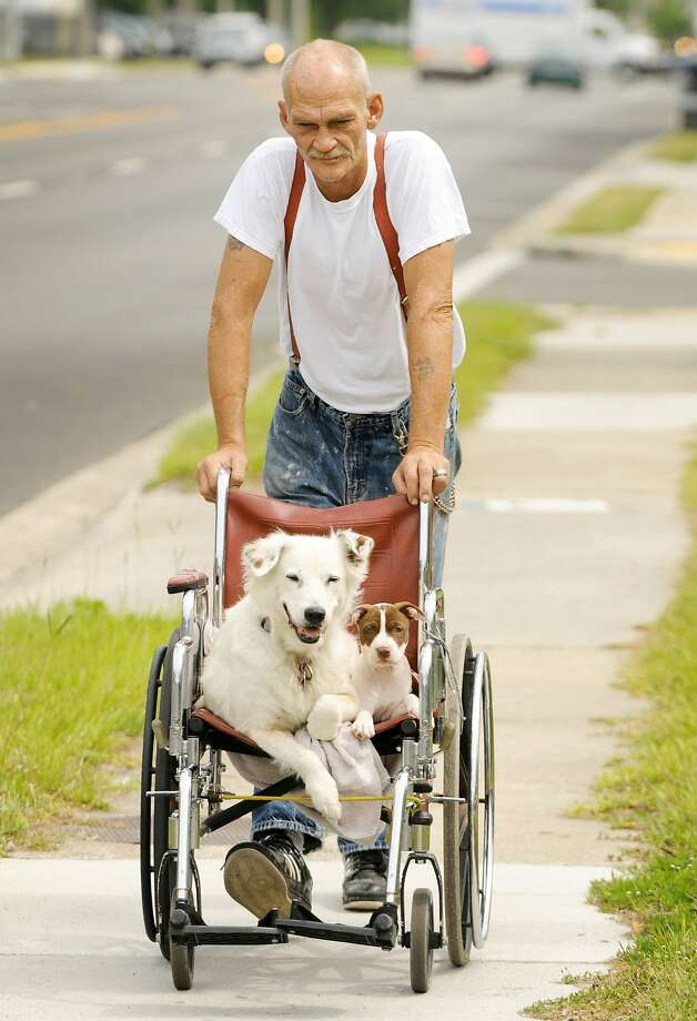Angel's walking days are over: Robert Crews pushes 18-year-old Angel and Patches the puppy down Cassat Avenue in Jacksonville, Fla. Crews says he chauffeurs Angel because she can no longer go for walks due to her bad hips. Patches could trot alongside them, but he prefers to ride as well. Photo: Bob Self, Associated Press
