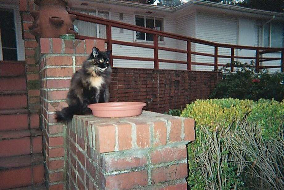 "Oakland resident Lucille Bellucci named her unplanned but welcome new cat Pinky because the cat had one pink toe. Bellucci got a ""kitty"" door so Pinky could come and go as she pleased. Photo: Lucille Bellucci"