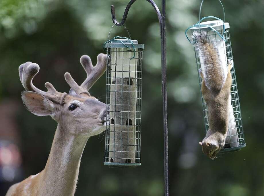 Some bird feedersin Nashville, Tenn., rarely feed birds. Photo: Mark Humphrey, Associated Press