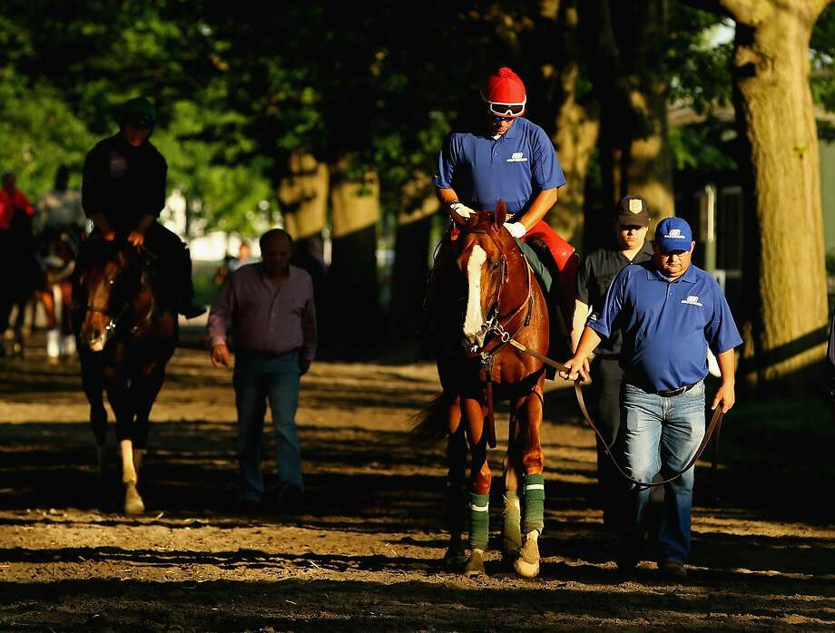 Assistant trainer Alan Sherman (right) leads California Chrome, with exercise rider Willie Delgado aboard, back to the barn after training on the main track at Belmont Park. Photo: Al Bello, Getty Images