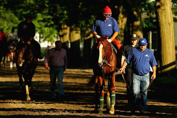 ELMONT, NY - JUNE 03:  Kentucky Derby and Preakness winner California Chrome, with exercise rider Willie Delgado up, and lead by assistant trainer Alan Sherman head back to the barn after training on the main track at Belmont Park on June 3, 2014 in Elmont, New York. He is scheduled to race for the Triple Crown in the 146th running of the Belmont Stakes  (Photo by Al Bello/Getty Images)
