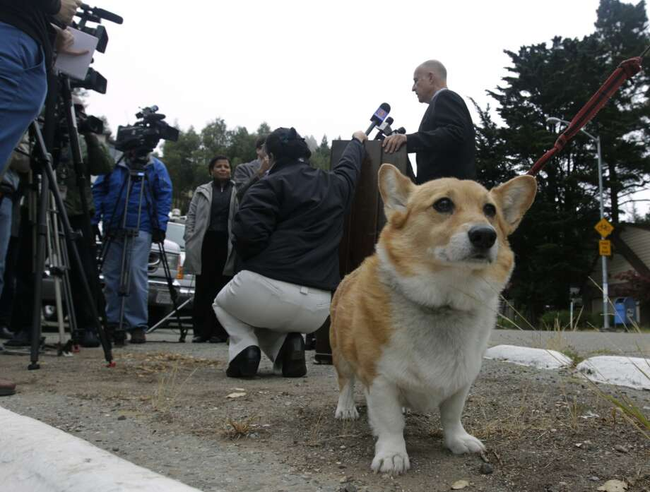 Sutter, California's first dog, stands by while Gov. Jerry Brown speaks to reporters after voting at a polling place in Oakland, Calif. on Tuesday, June 3, 2014. Brown is running for reelection for a second consecutive term and will likely face either Republicans Neel Kashkari or Tim Donnelly in the November general election. Photo: Paul Chinn, The Chronicle