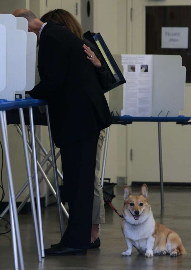 Sutter, California's first dog, waits patiently while Gov. Jerry Brown votes with his wife Anne Gust at a polling place in Oakland, Calif. on Tuesday, June 3, 2014. Brown is running for reelection for a second consecutive term and will likely face either Republicans Neel Kashkari or Tim Donnelly in the November general election. Photo: Paul Chinn, The Chronicle