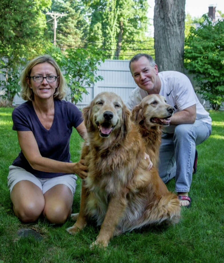 Barbara and Bill Gorgas have given a new home to golden retrievers Clancy, left, and Chase. The dogs, brothers, were formerly owned by Monsignor Frank Wissel who has moved into The Nathaniel Witherell nursing home. Photo: Contributed Photo / Greenwich Time
