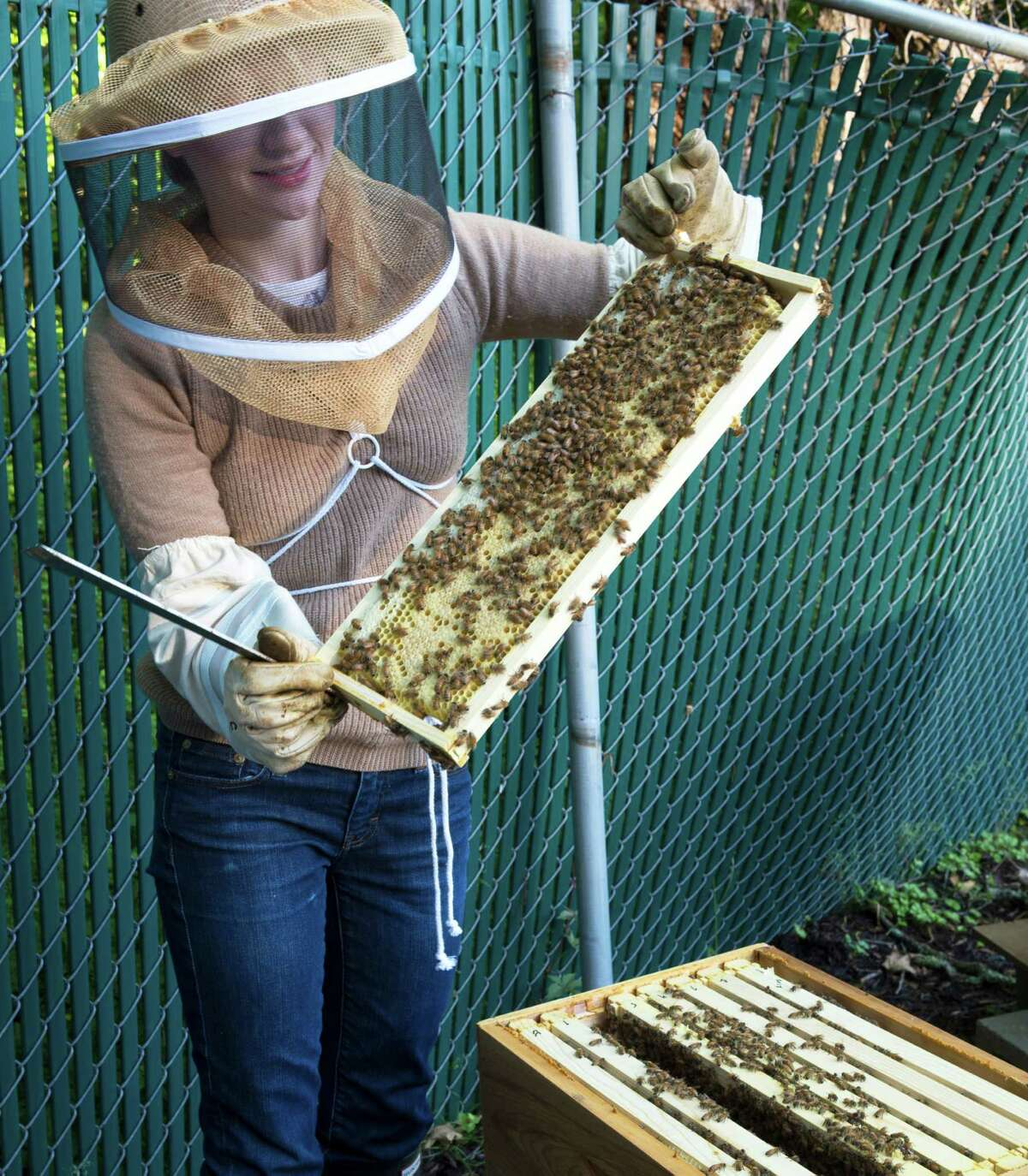Honey provided colonial families with medicine, sweetner, preservative and beeswax. To illustrate the importance of bee keeping in colonial times, the Ogden House gardens support beehives, here being examined by beekeeper Tess Brown.