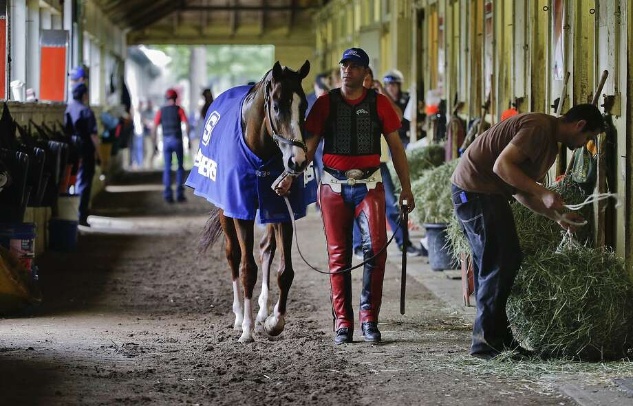 Exercise rider Willie Delgado hot walks California Chrome after a workout at Belmont Park. Photo: Julie Jacobson, Associated Press