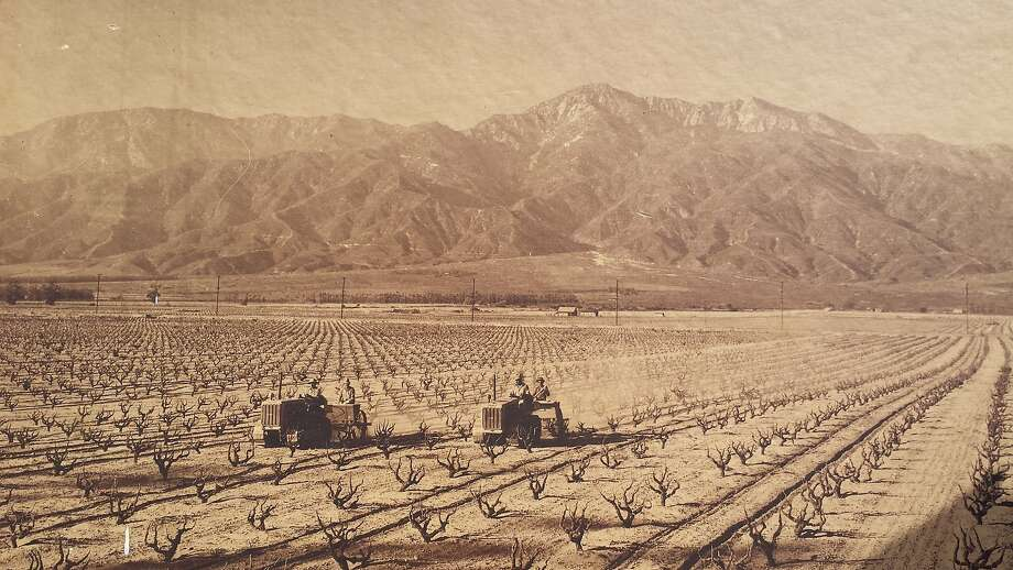 Cucamonga Valley in 1940s. Photo: Courtesy Paul Hofer III
