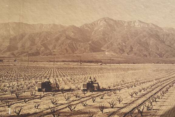 A 1940s photograph showing vineyards in the Cucamonga Valley near what is now the Ontario airport. The land, once owned by the Guasti and Hofer families, among others, was largely annexed to make way for the airport and other development. The San Gabriel Mountains can be seen in the background.